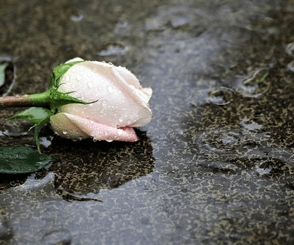 Հովհաննես Գրիգորյան. «Ամեն անգամ ինչ-որ բան կորցնելիս ես հիշում եմ քեզ»