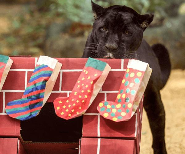 Կենդանաբանական այգիների բնակիչներն ամանորյա նվերներ են ստացել (լուսանկարներ)