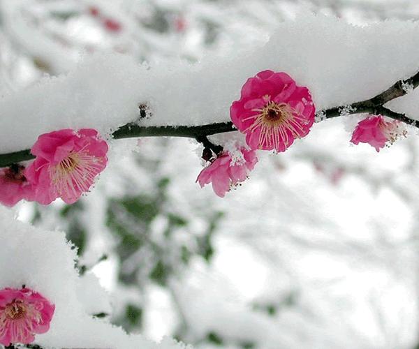 Հայաստանի որոշ շրջաններում ցրտահարության վտանգ կա
